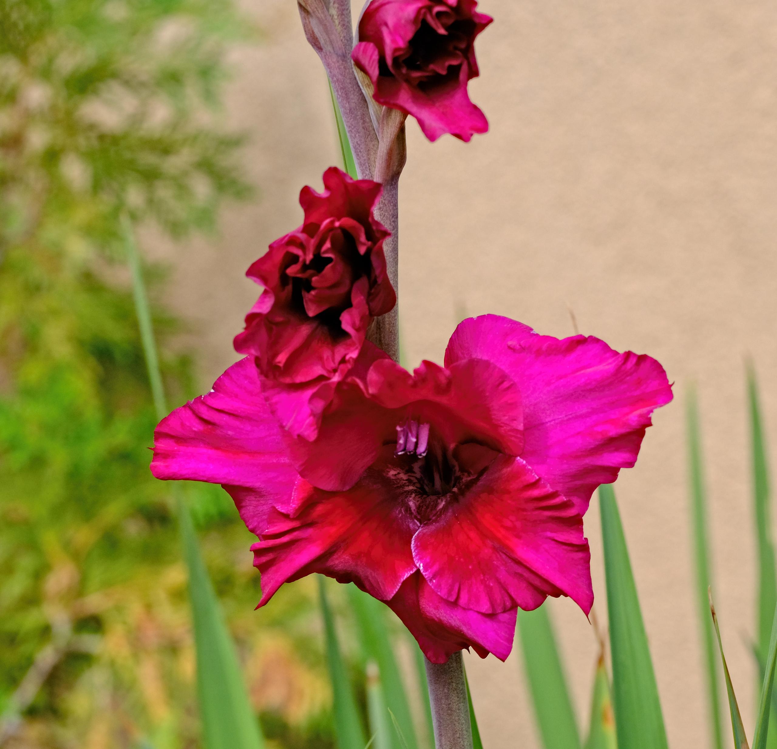 Fleurs du matin botanical fotozones for Botanic fleurs artificielles